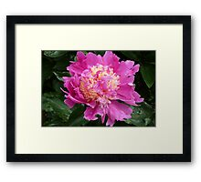 The wow factor Framed Print