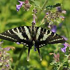 Zebra Swallowtail by Lynn Gedeon