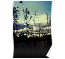 Dark reeds Poster