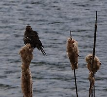 ruffled feathers by vigor