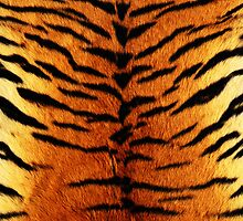 iPhone Cover - Skins Of Tiger by Chibie