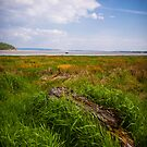 Taf Estuary Laugharne by mlphoto