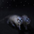 Nightstalkers by Carol Bleasdale