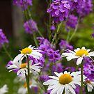 The Daisy garden by Jeff  Wilson
