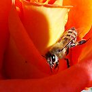 1665-bee on the rose by elvira1