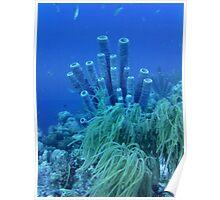 Underwater Tube Sponges Poster