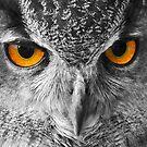 European Eagle Owl by SteveHphotos