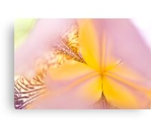 Macro Iris close up Canvas Print