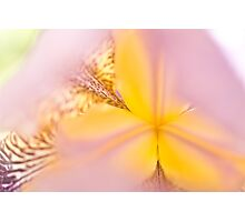 Macro Iris close up Photographic Print