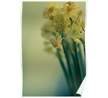 Bunch of narcissi standing tall Poster