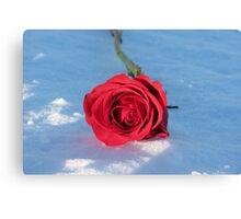 Red Rose - British Columbia Canada Canvas Print