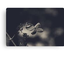 That Special Warmth Canvas Print