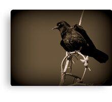 Black Bird - British Columbia Canada Canvas Print