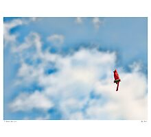Sky Perch Photographic Print