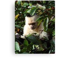 Jungle Monkey Canvas Print
