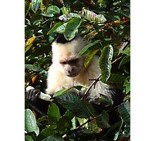 Jungle Monkey Photographic Print