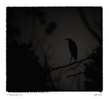 Night Perch Photographic Print