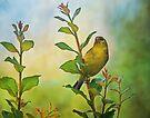 American Gold Finch by Sandy Keeton