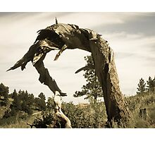 Mountainside Sculpture Photographic Print