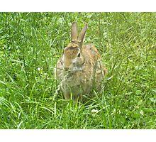 Bunny in my Backyard Photographic Print