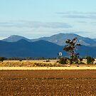 Nandewaa Range from Pikes Lane by Elizabeth McPhee