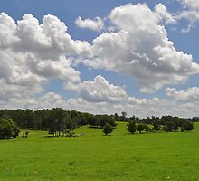 Florida Farm Land  by Michael L Dye