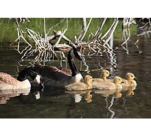 Goose family on water Photographic Print