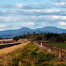 On the road to Little Mountain, Narrabri by Elizabeth McPhee