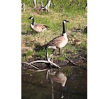 Canada Goose reflection Photographic Print