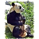 Cute Giant Panda Bear with tasty Bamboo Leaves by Val  Brackenridge