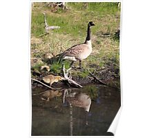 Canada Goose reflection II Poster