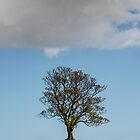 0NE TREE ONE SHEEP. by johnrace
