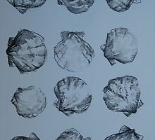 Shells in black and white -pen and wash by cathyjacobs