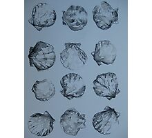 Shells in black and white -pen and wash Photographic Print