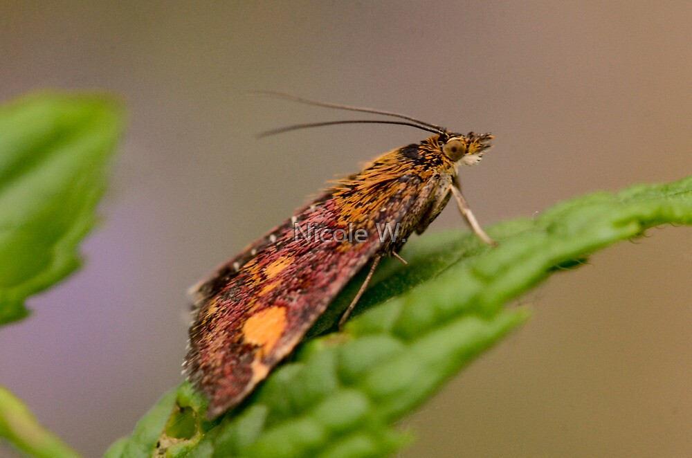 Moth by Nicole W.