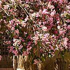 """Spring Arriving In Pink"" by Bruce Jones"