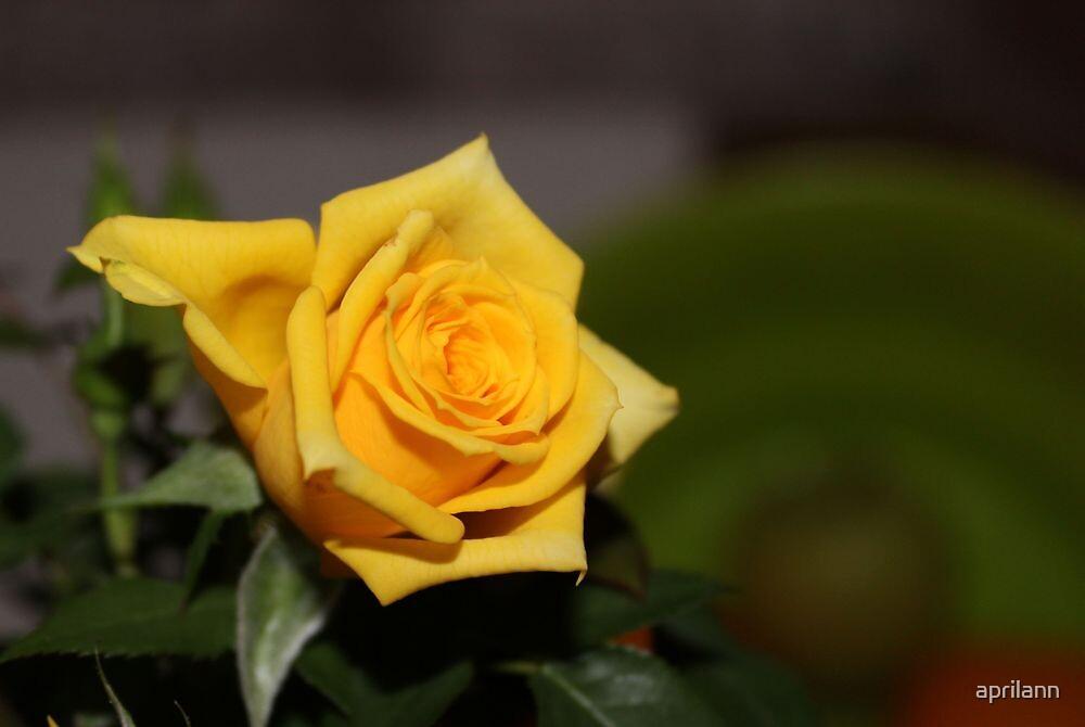 A Texas Yellow Rose by aprilann