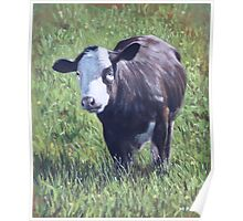 Cow in grass Poster