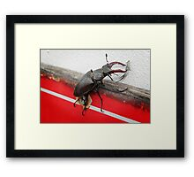 Carry That Weight - The Beetle  Framed Print