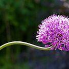 The colour purple by Jeff  Wilson