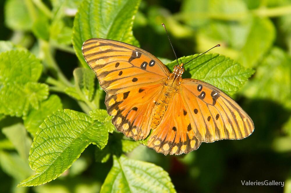 Gulf Fritillary Butterfly by ValeriesGallery