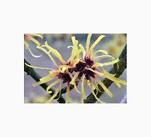 Witch Hazel (Hamamelis sp.) in flower Unisex T-Shirt