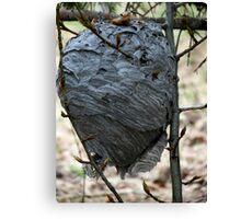 Bee's Nest - British Columia Canada Canvas Print