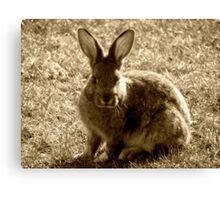 Bunny - British Columbia Canada Canvas Print