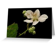 OREGON BLACKBERRY FLOWER  AND RECIPE Greeting Card