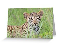 Hiding in the long grass! Greeting Card
