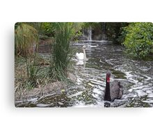 Black & White Swan Canvas Print