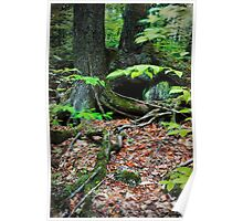 Tree Roots and Boulders Poster