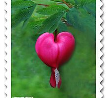 (✿◠‿◠)Lamprocapnos spectabilis(bleeding heart) Stamp by ✿✿ Bonita ✿✿ ђєℓℓσ