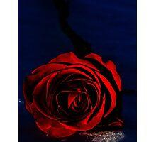 Rose - British Columba Canada  Photographic Print